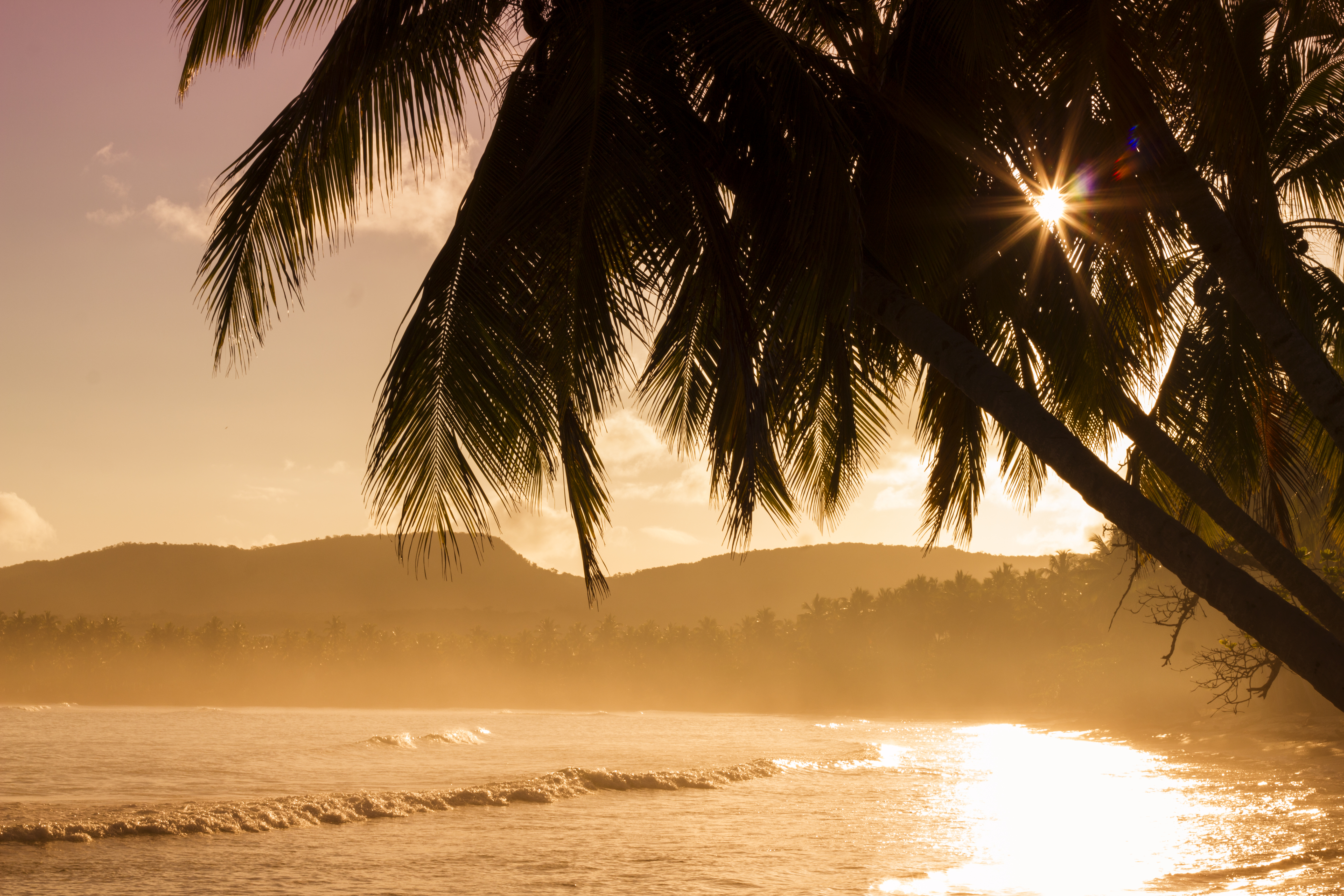 silhouette of palm tree near body of eater free stock photo