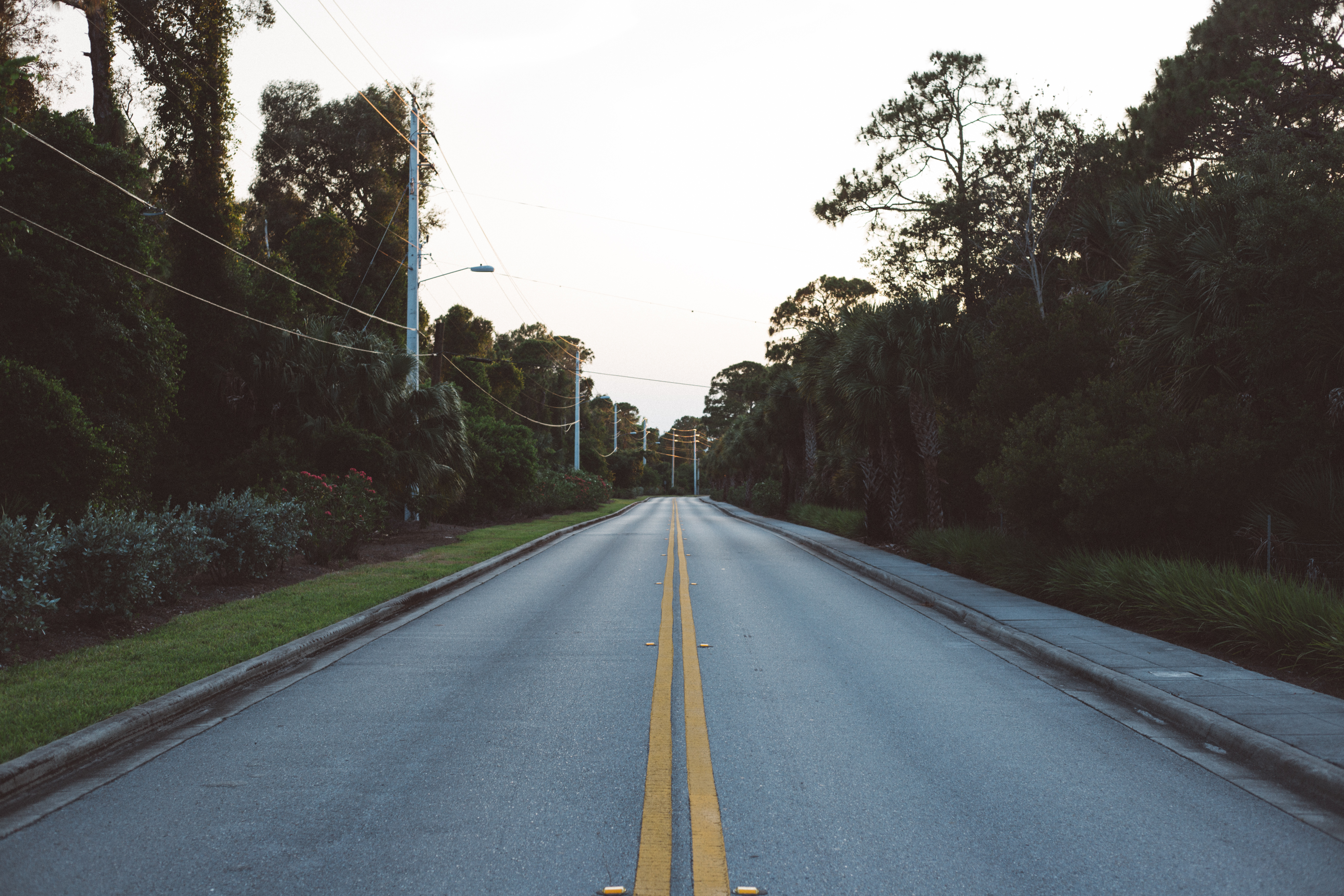 Straight Empty Road Between Trees during Daytime · Free Stock Photo for Straight Road With Trees  166kxo