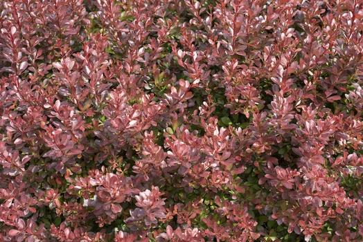 Brown Petal Flower Garden