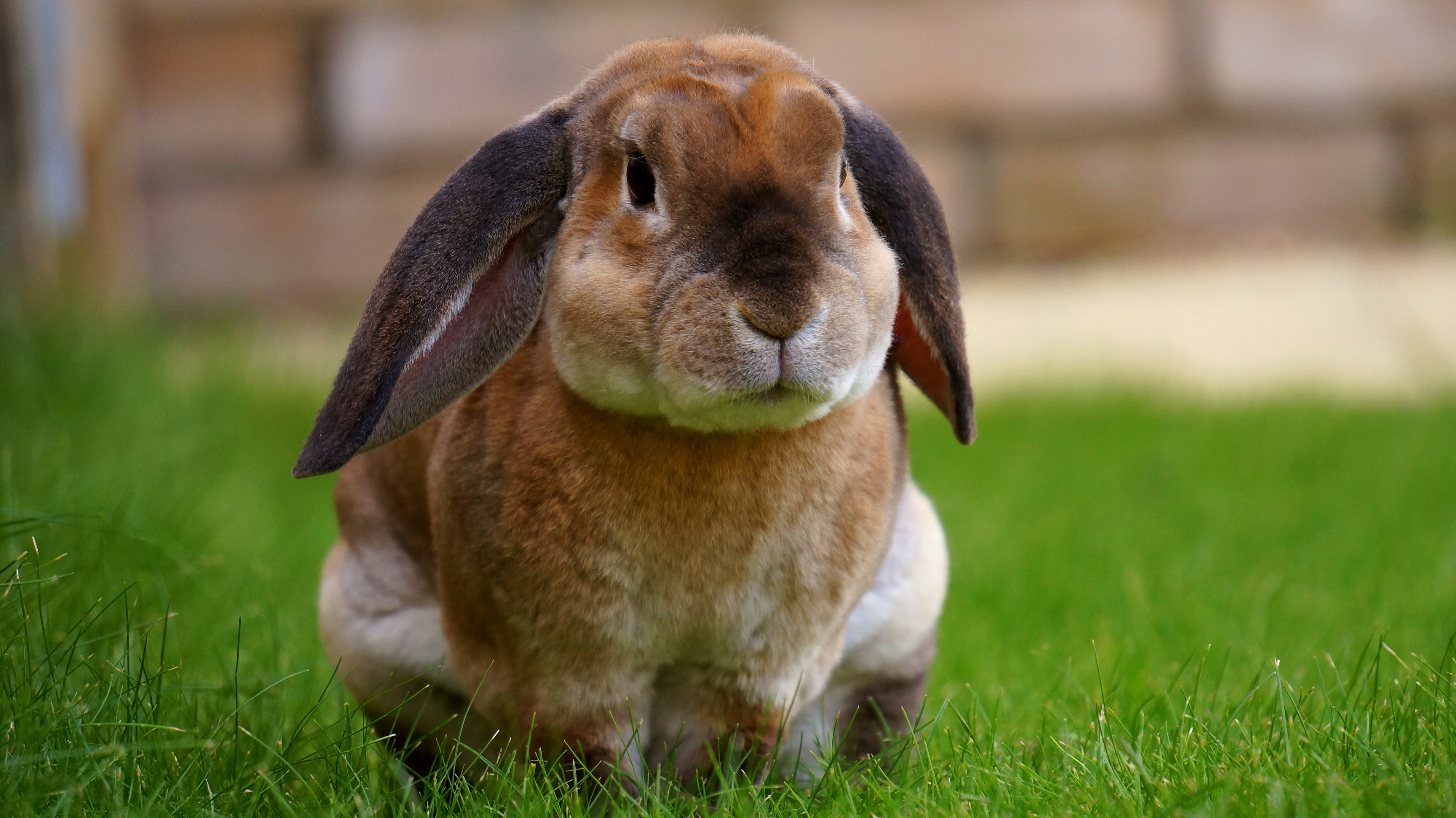 free stock photos of easter bunny pexels
