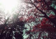 nature, sun, trees