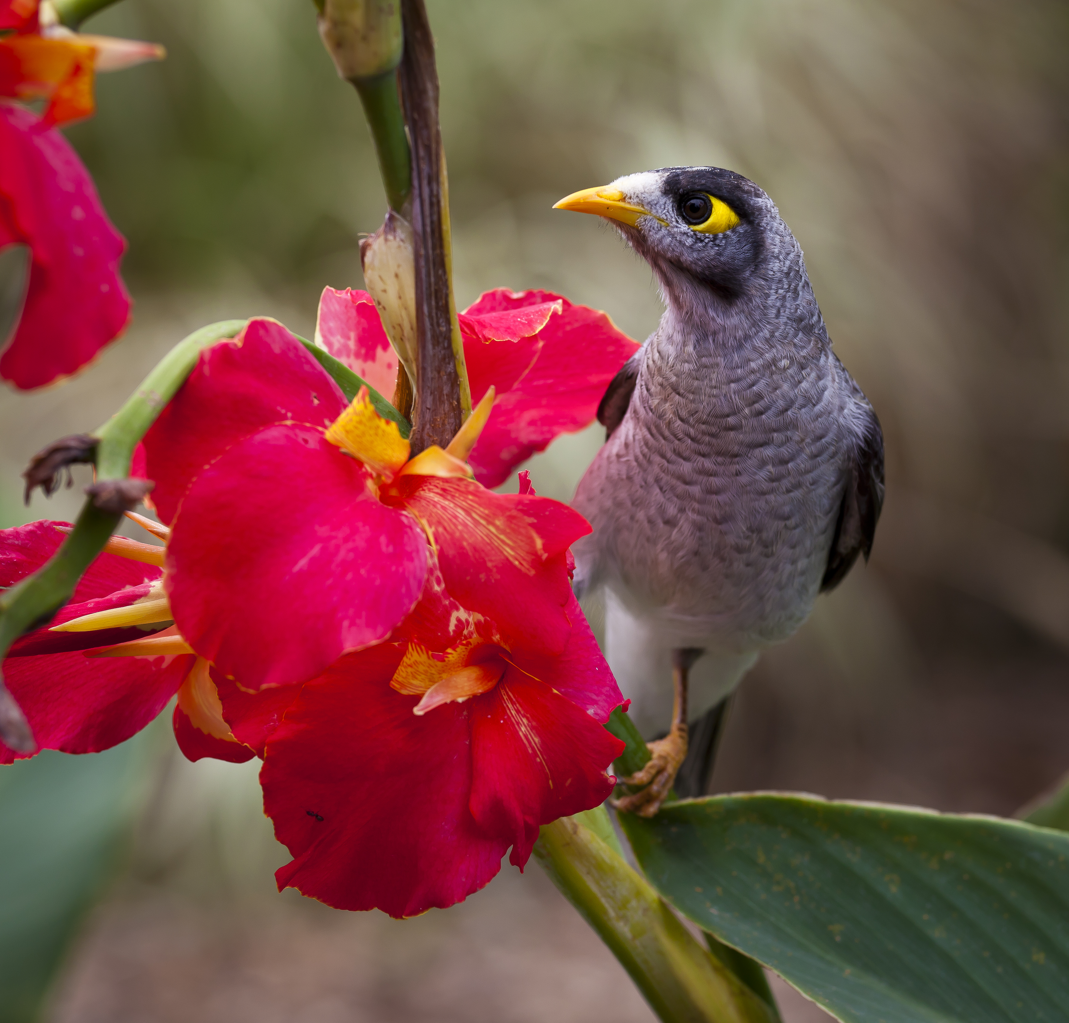 Flowers Made Black Brids: Black Grey White Yellow Bird Near On Pink Petal Flower