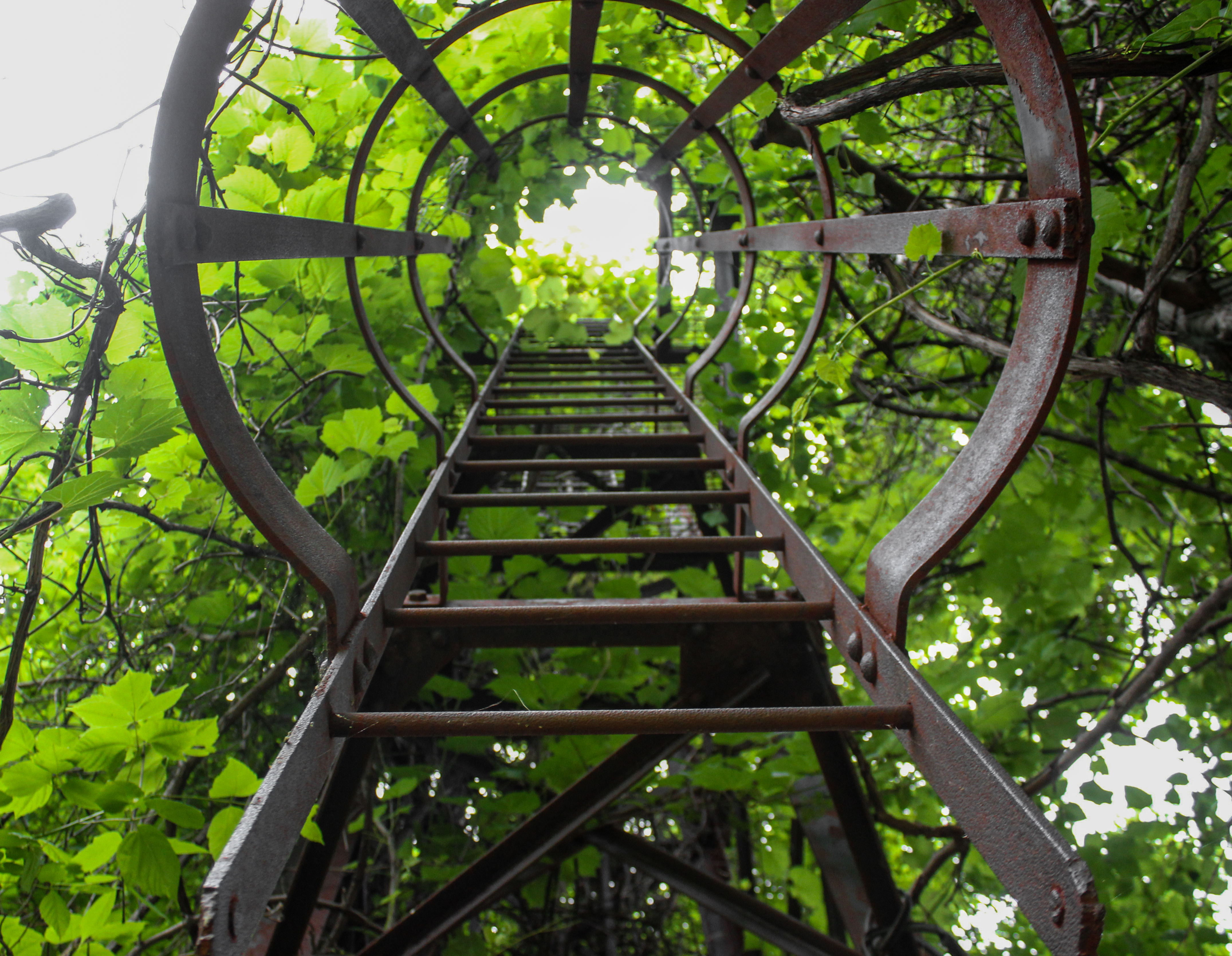 the ladder essay Career path for accounting studies it is always so hard to give the exact number of people who have majored in accounting, but one thing that i know is that the.