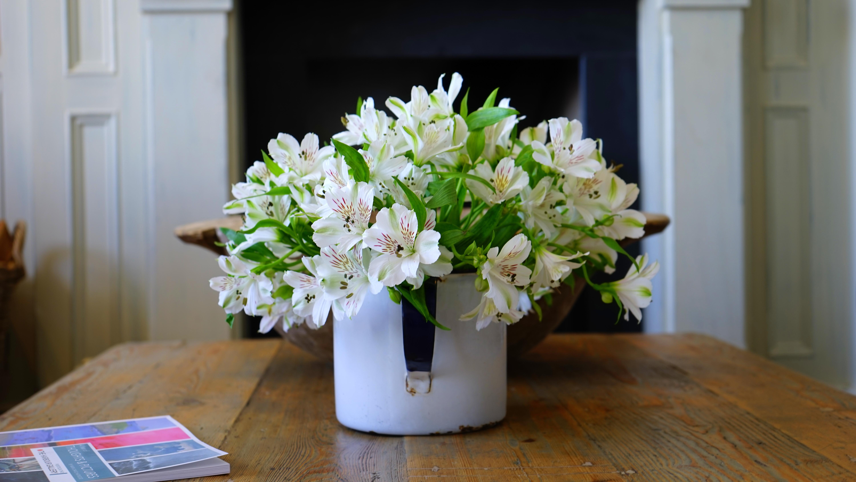 free stock photos of flower vase · pexels - white petaled flower on white flower vase