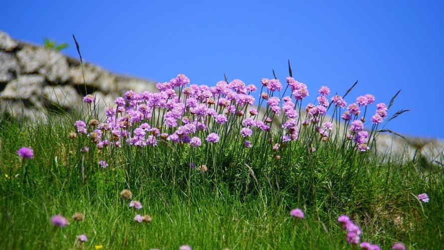 Purple Flower during Daytime
