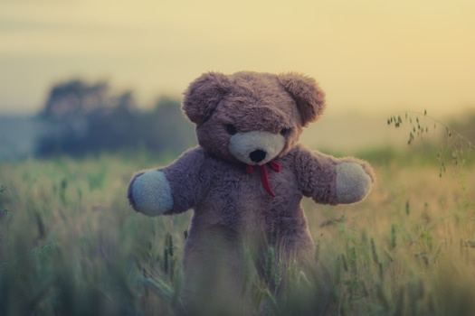 Brown Bear Plush Toy on Green Grass