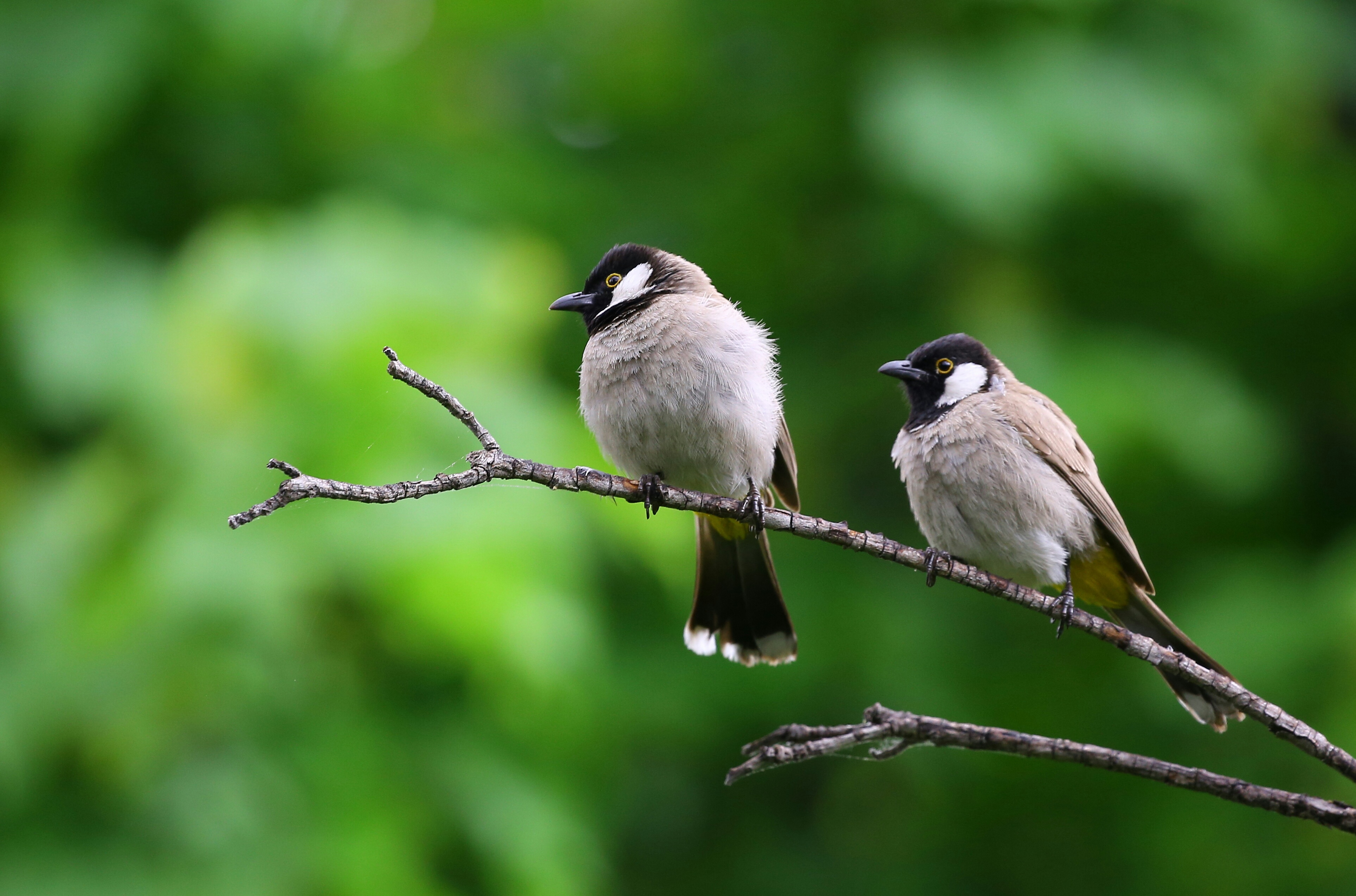 white and black birds piercing on tree branch free stock photo