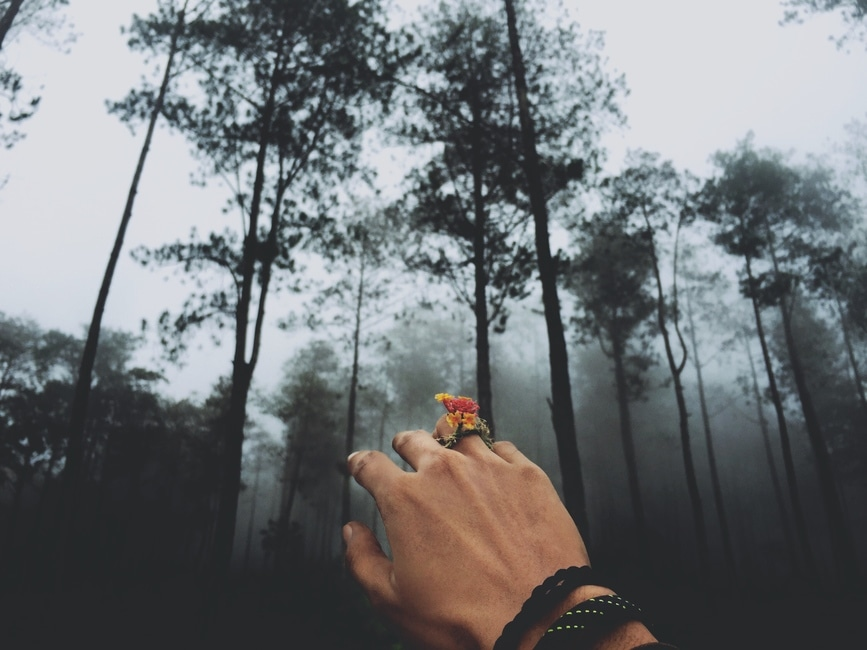 Person With Black Braided Bracelet Raising His Hand Facing Green Tall ...: https://www.pexels.com/photo/tree-people-landscape-outdoors-111175