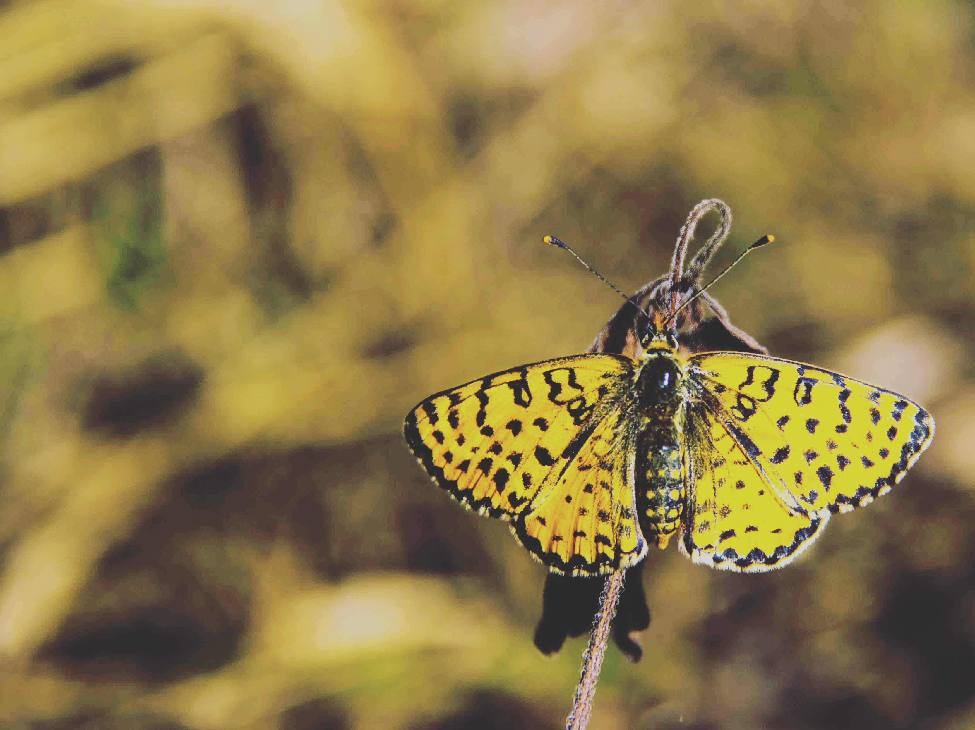 yellow and black butterfly free stock photo