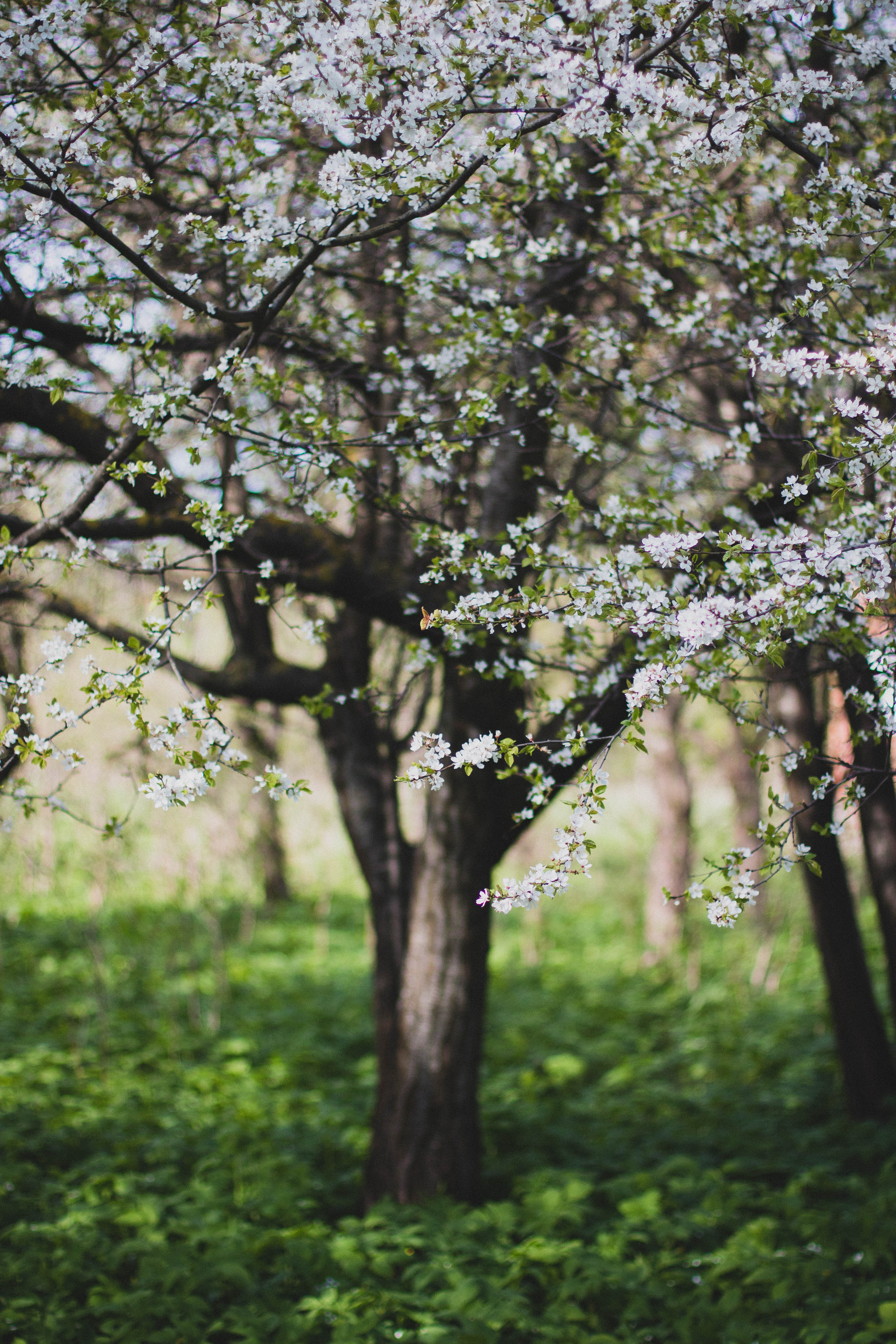 green and white petaled flower trees free stock photo