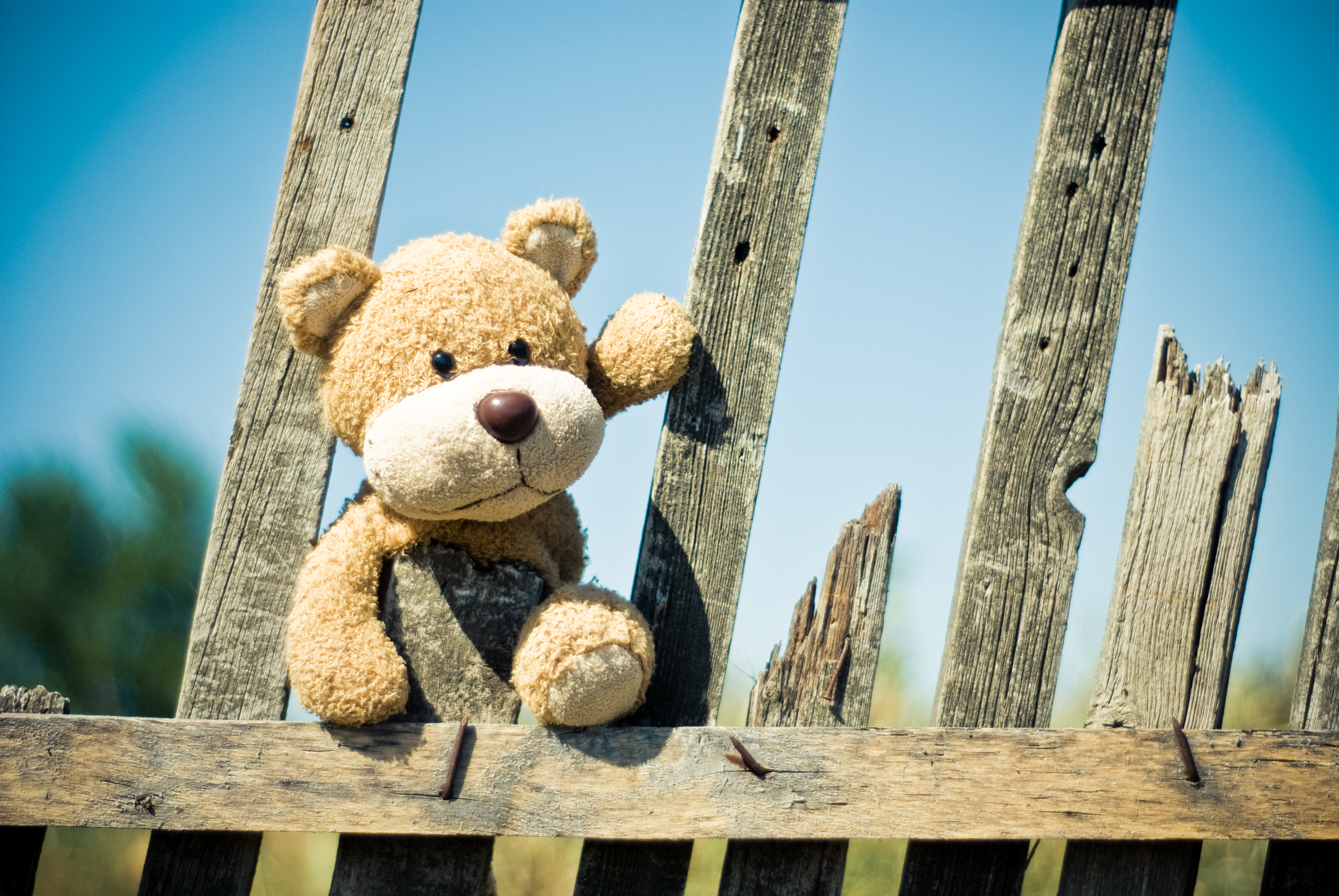 brown teddy bear on brown wooden fence free stock photo