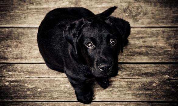 Free stock photo of wood, animal, dog, pet