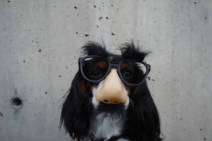Dog Wearing Black Sunglasses