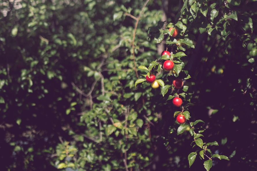 Red Round Fruit during Daytime