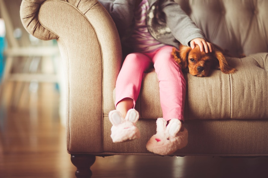 Girl in Grey Jacket and Pink Jeans Sitting in Grey Sofa Holding a Brown Short Coated Puppy