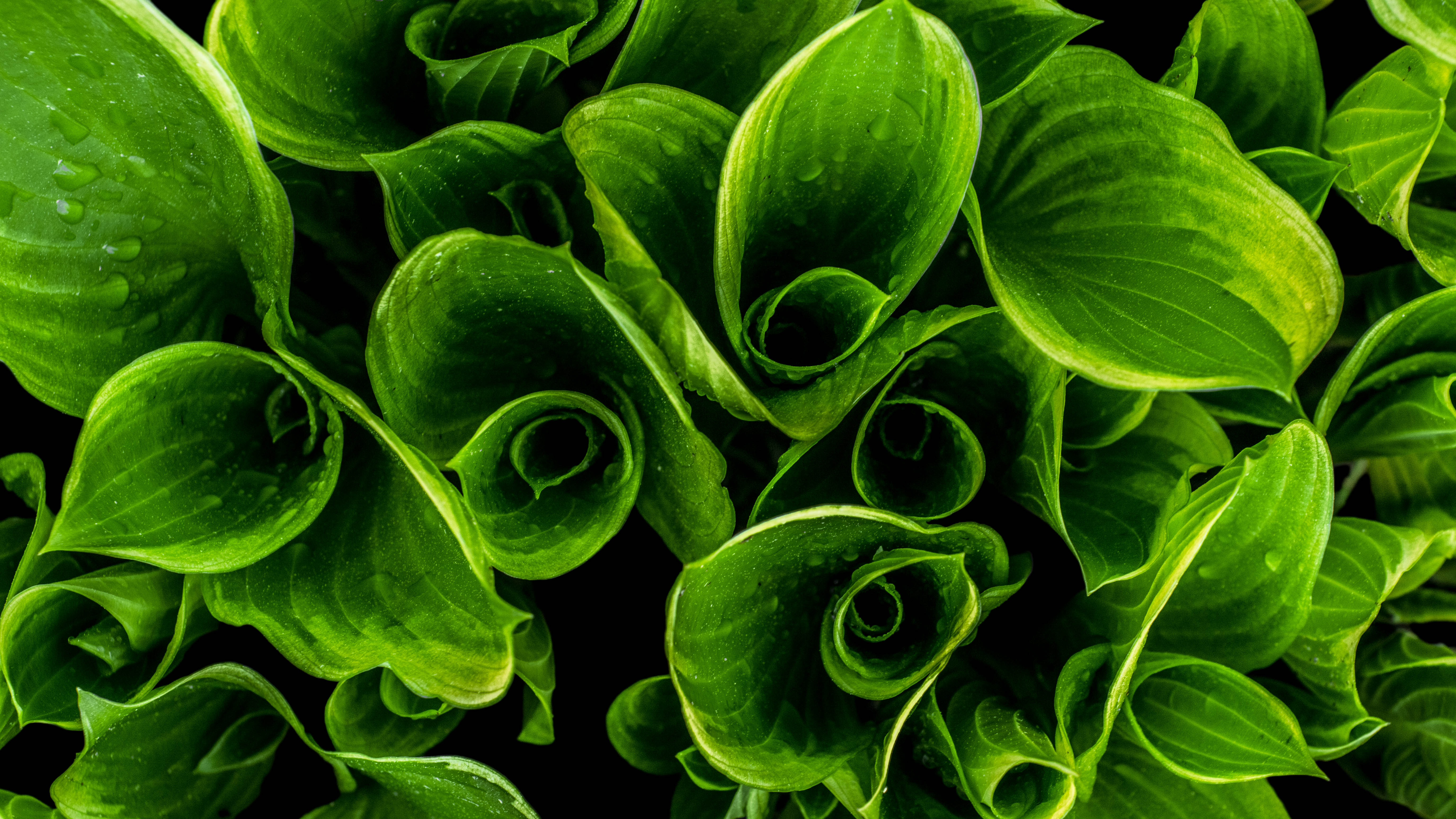 Free Stock Photo Of Close-up, Green, Leaves