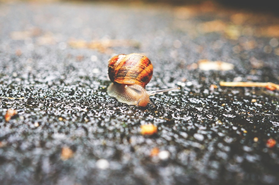 Selective Focus Photography Of Gray Threads: Selective Focus Photography Of Snail On Grey Asphalt Road
