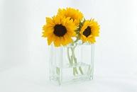 flowers, yellow, sunflowers