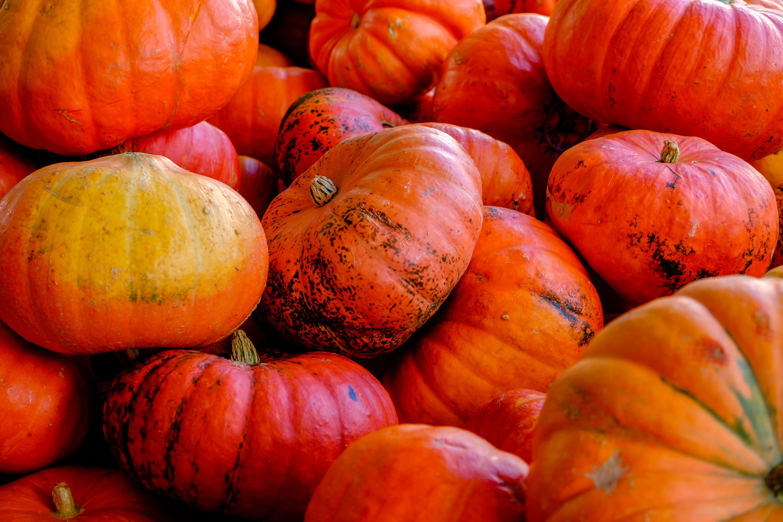 free stock photo of halloween pumpkins thanksgiving