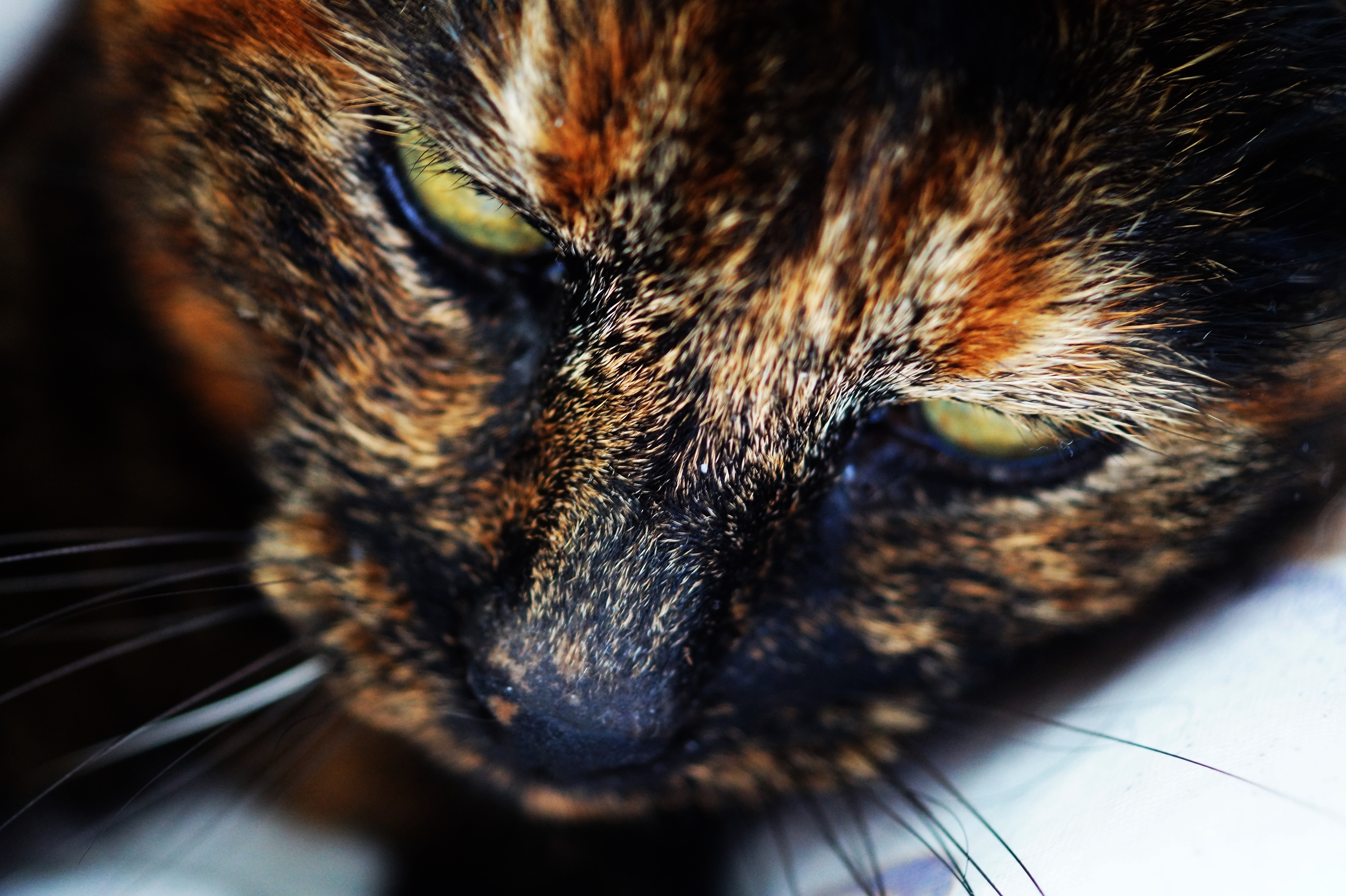 Photography Of Orange Brown And White Face Of Cat 183 Free