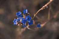 Macro Photography of Blue Petaled Flower