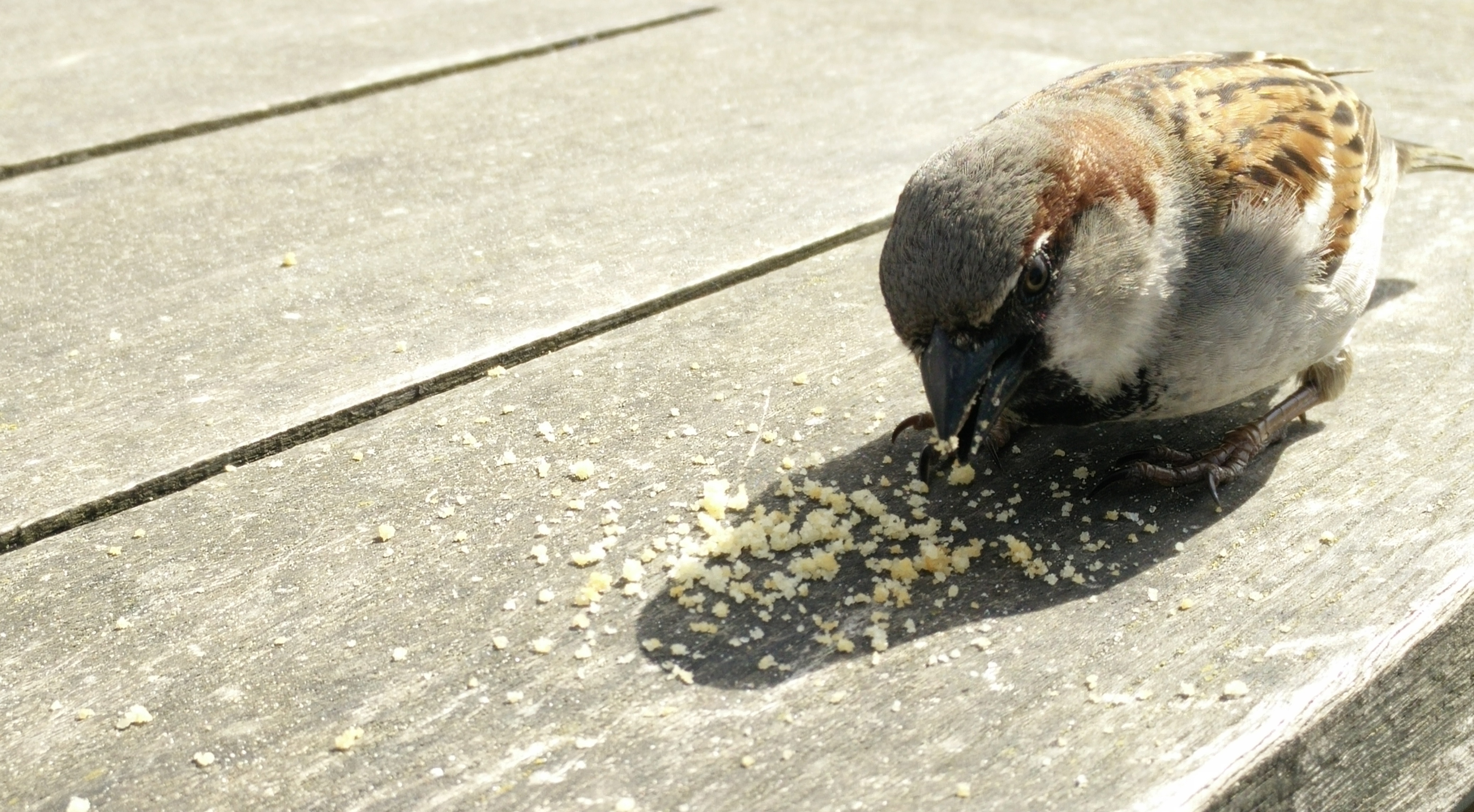 free stock photo of bird bread eating