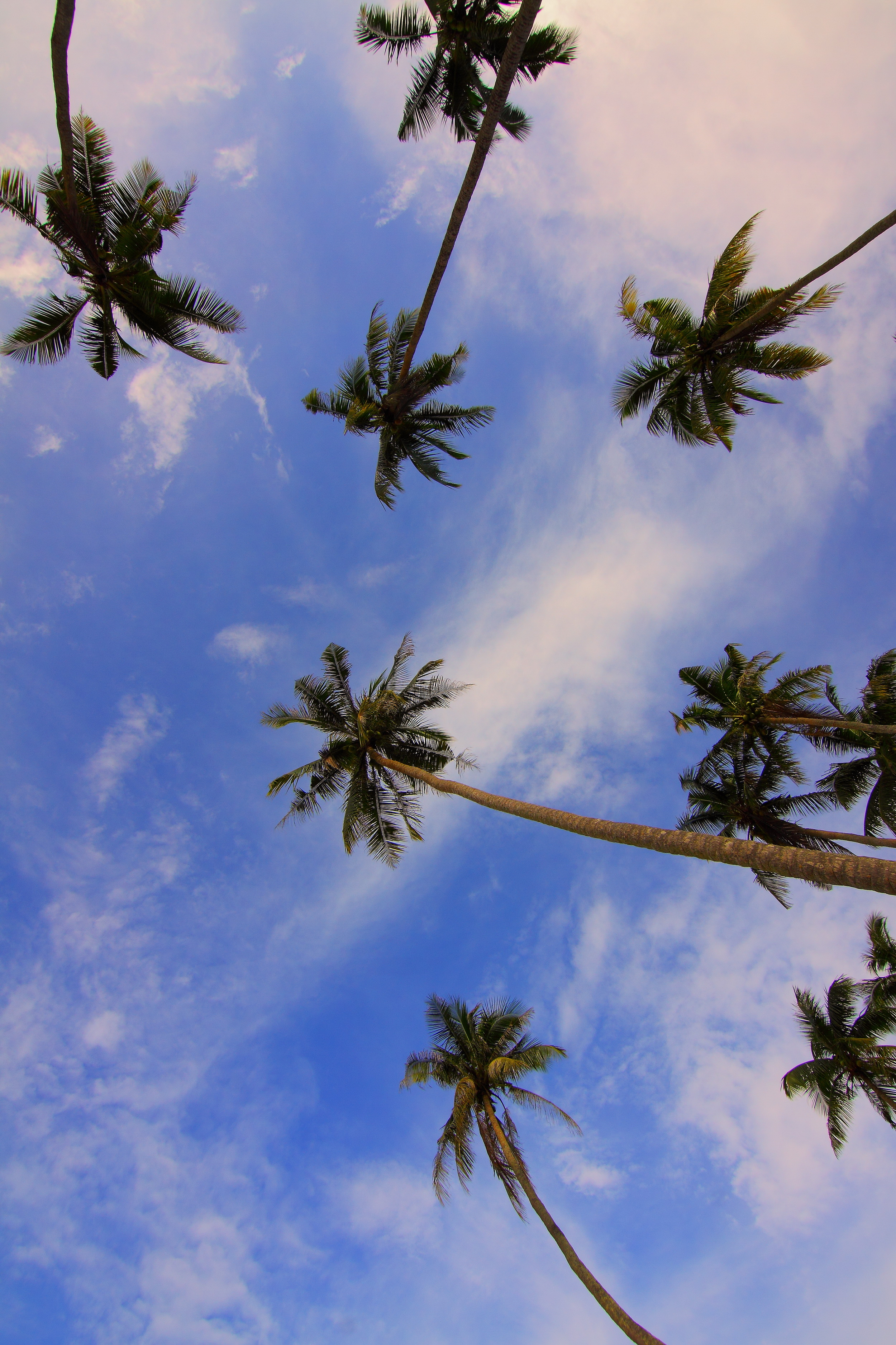 free stock photos of palm trees pexels