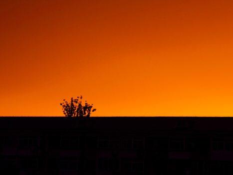 Silhouette Photo of Tree