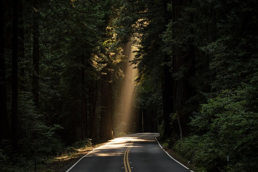 Sun Rays Goes Through Tree on Concrete Road