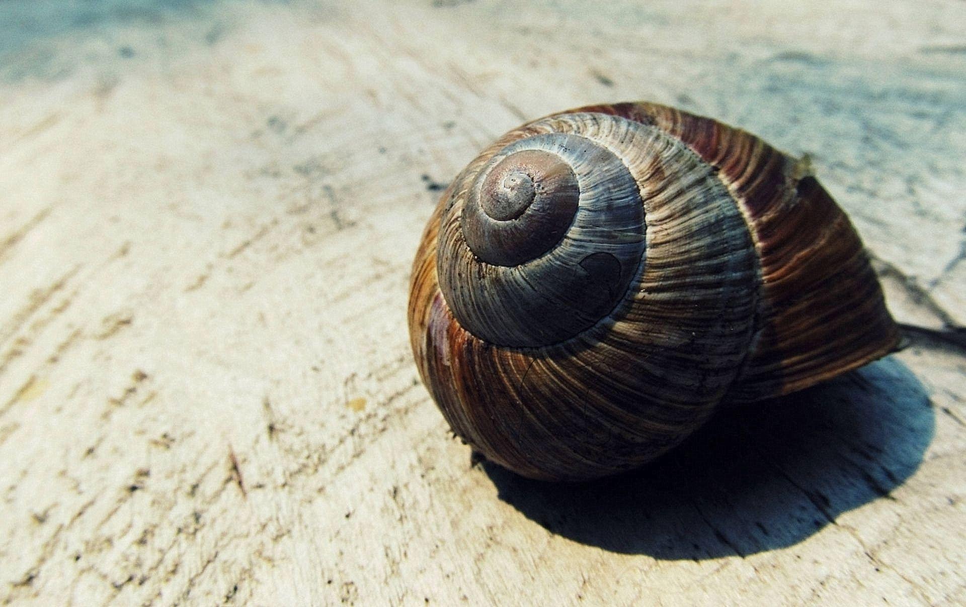 free stock photos of snail shell pexels