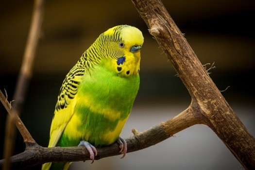 Free stock photo of bird, animal, colorful, colourful