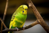 bird, animal, colorful