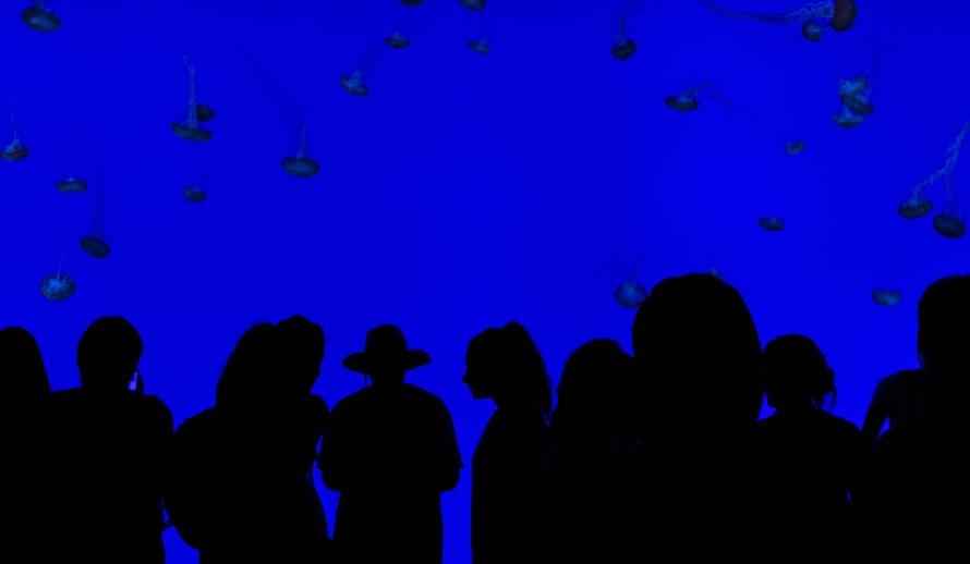 Free stock photo of aquarium, blue, crowd
