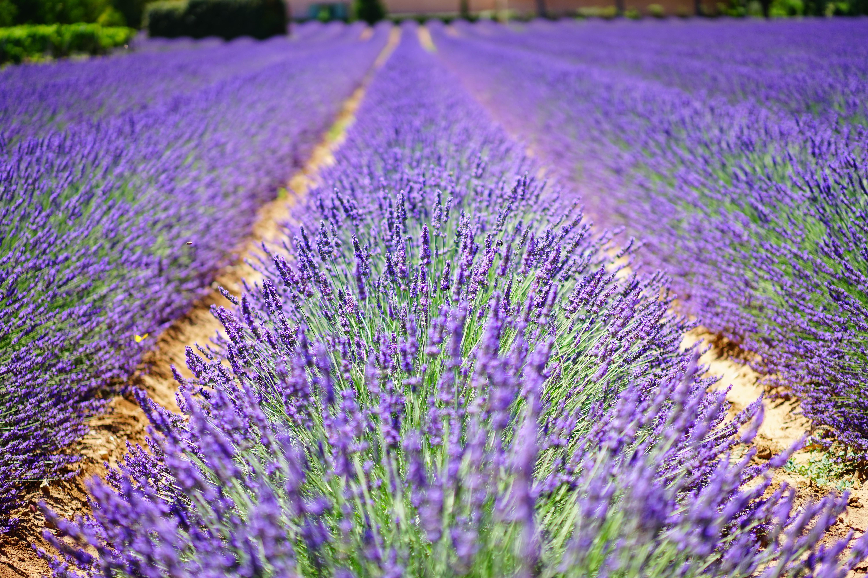 Macro Shot Photography Of Purple Plants Under Sunny Sky