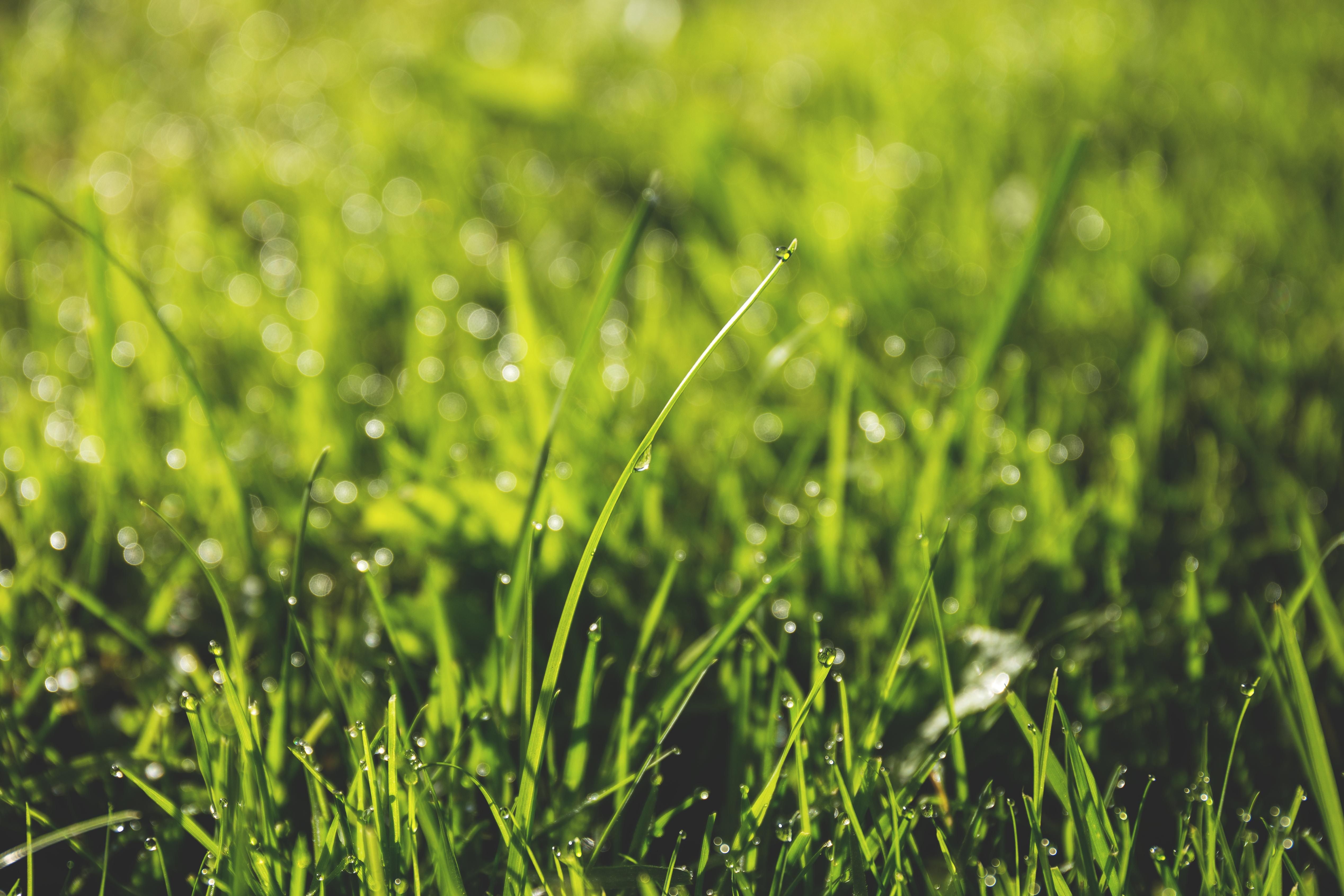 grass macro photography - photo #1