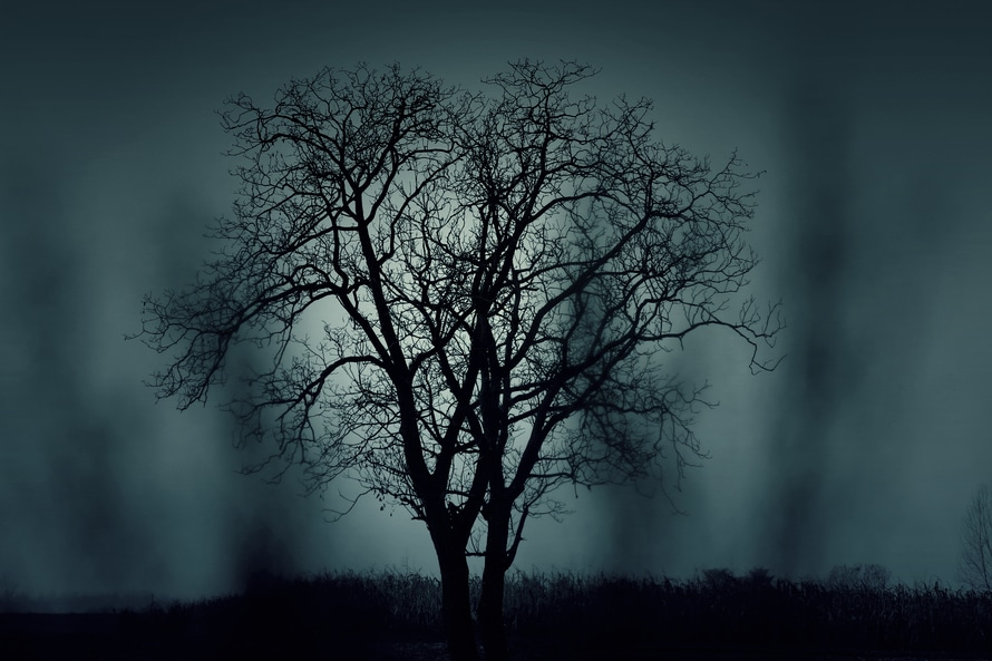 nature, night, dark