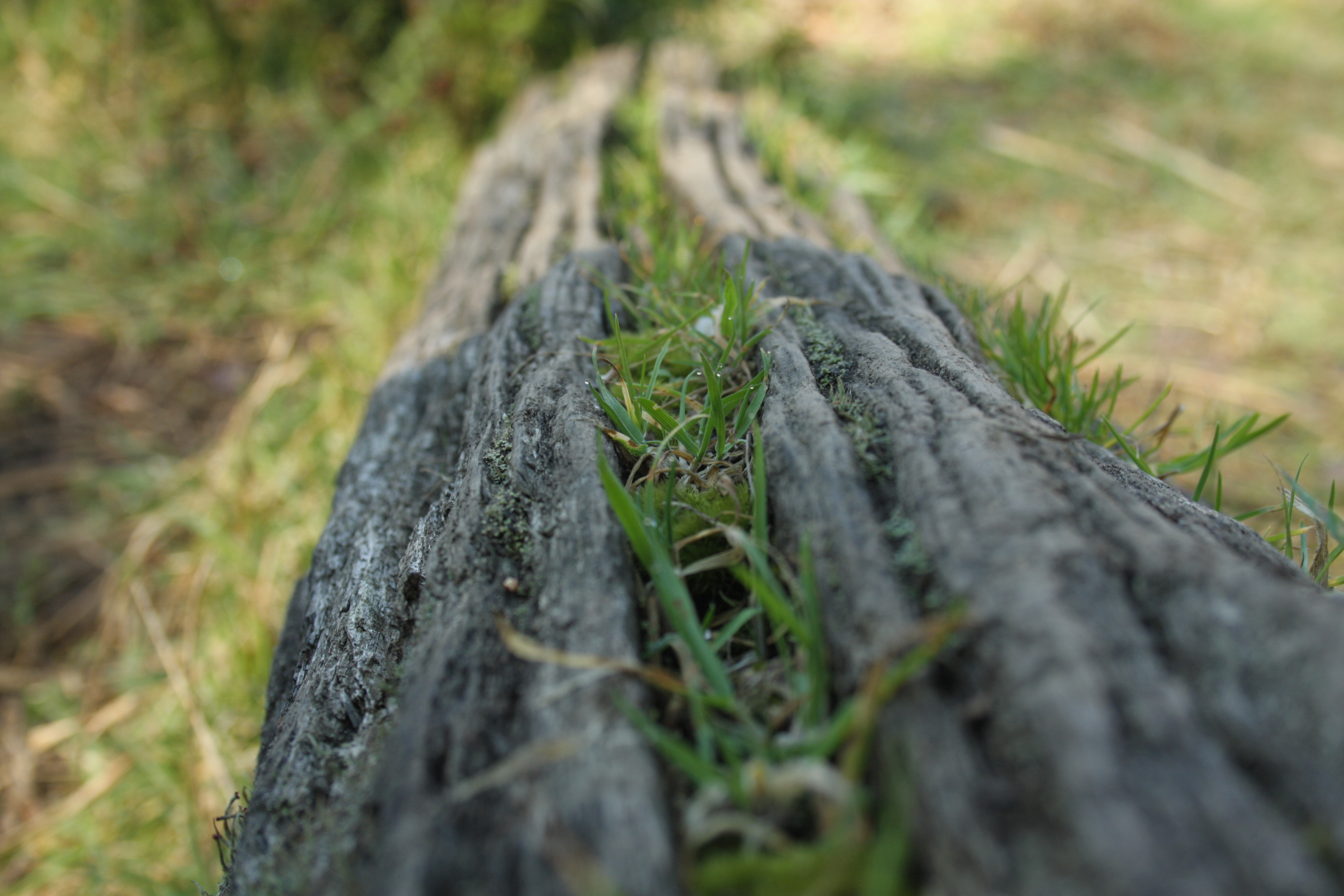 depth of field nature - photo #24