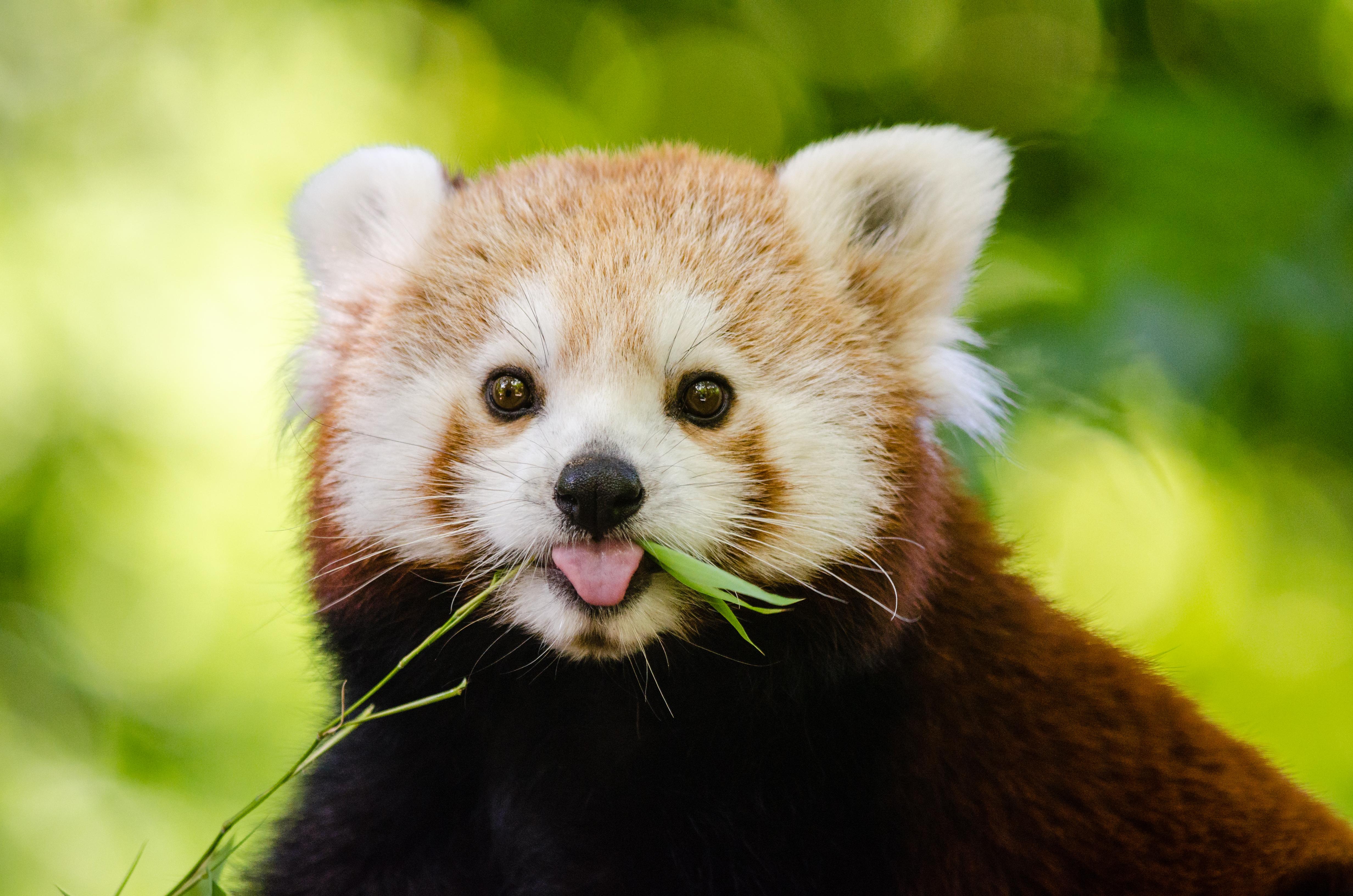animal pictures pexels free stock photos