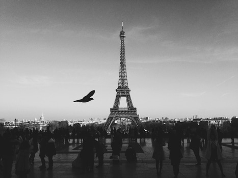 Free stock photo of black-and-white, city, bird, people