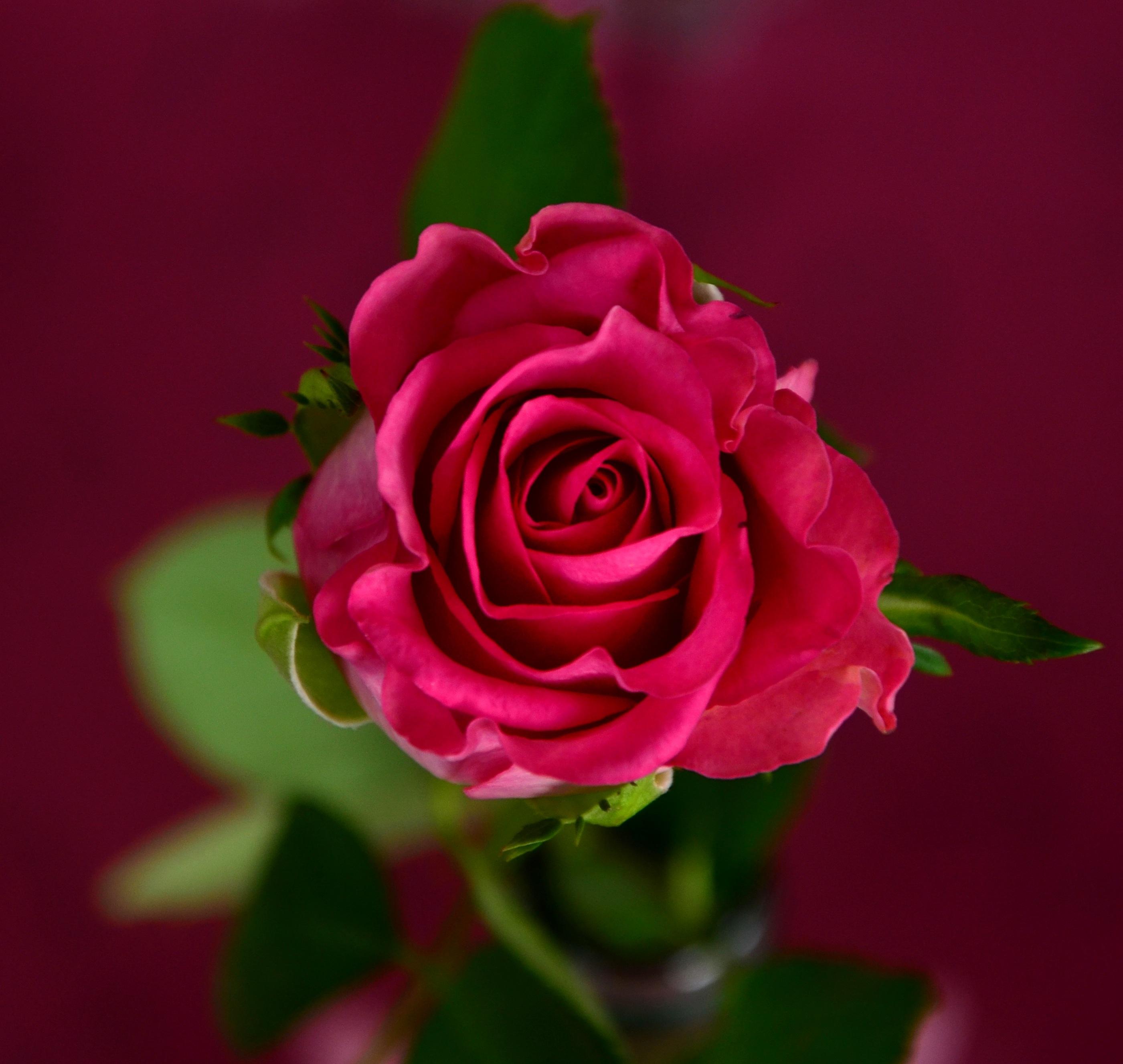 Три розы скачать бесплатно mp3