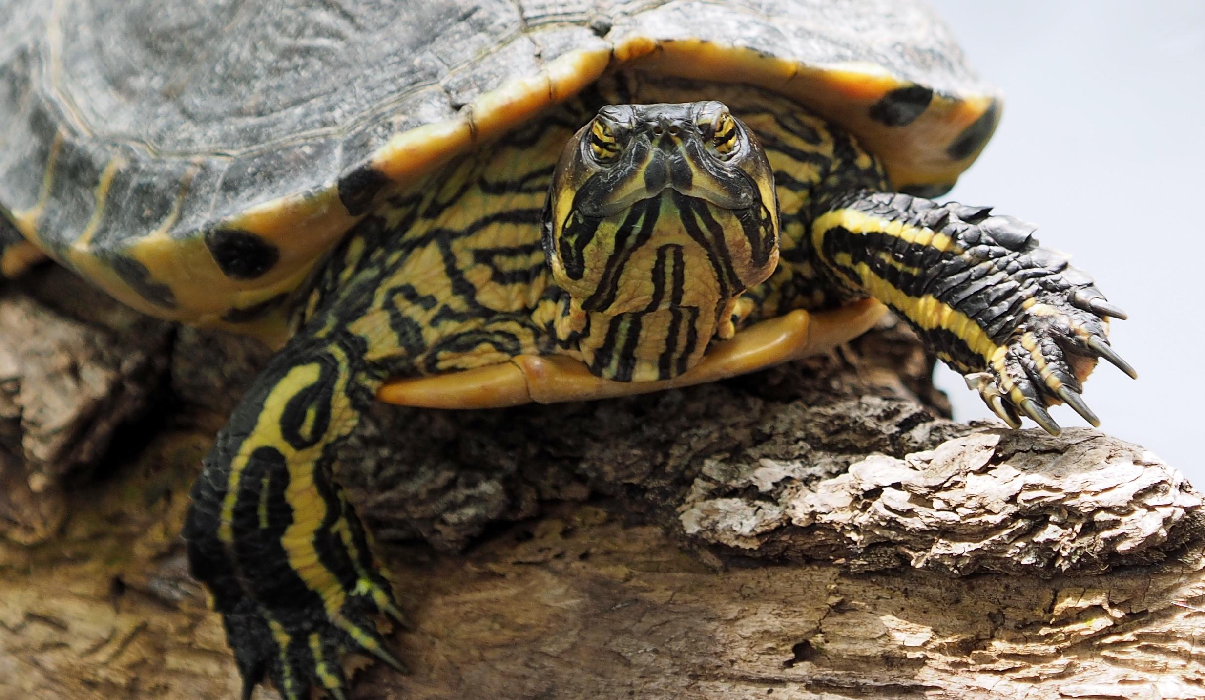 turtle photos pexels free stock photos