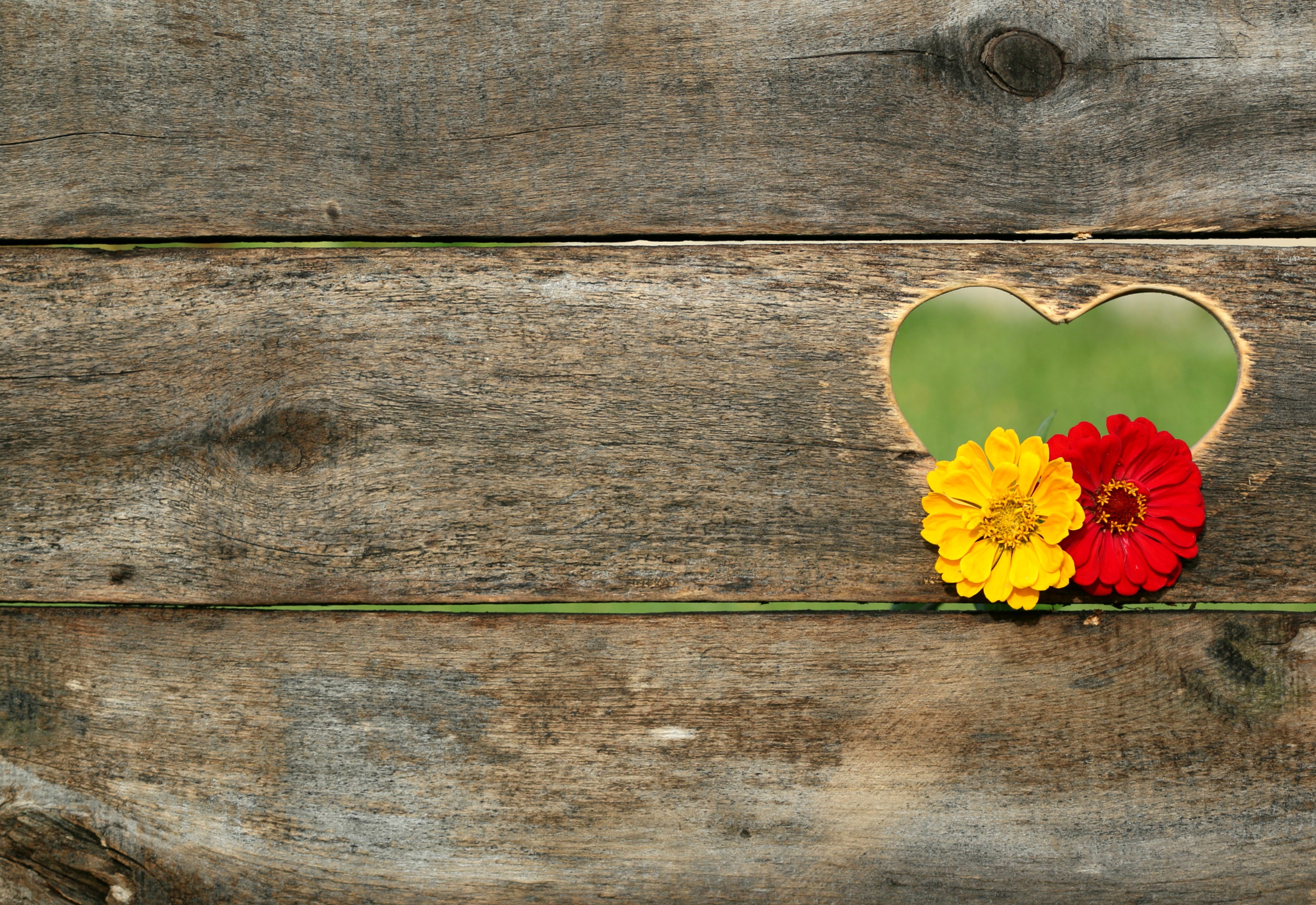 postcard-heart-flowers-board-158635.jpeg (3225×2218)