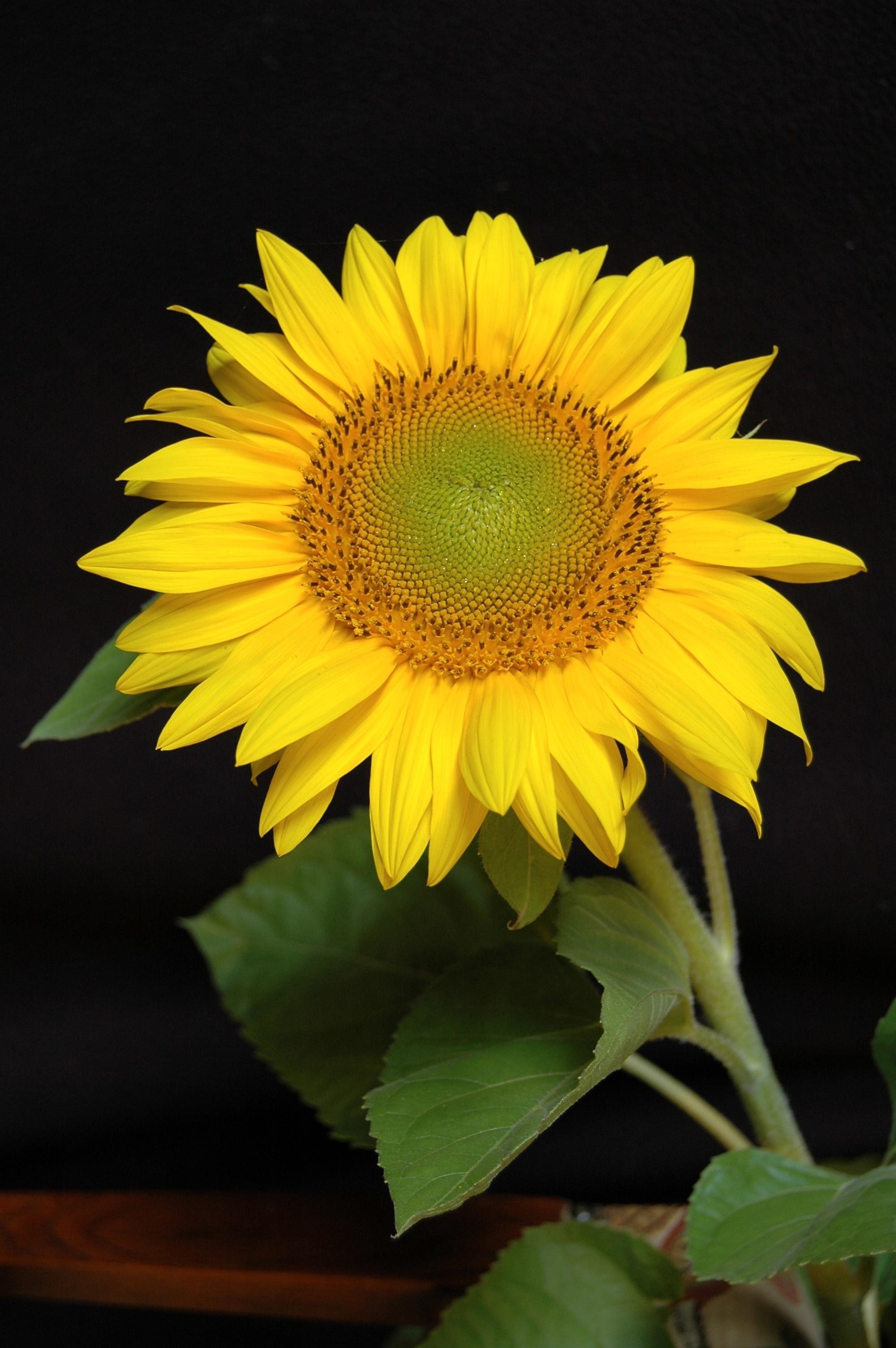 yellow flower plant in macro shot  u00b7 free stock photo