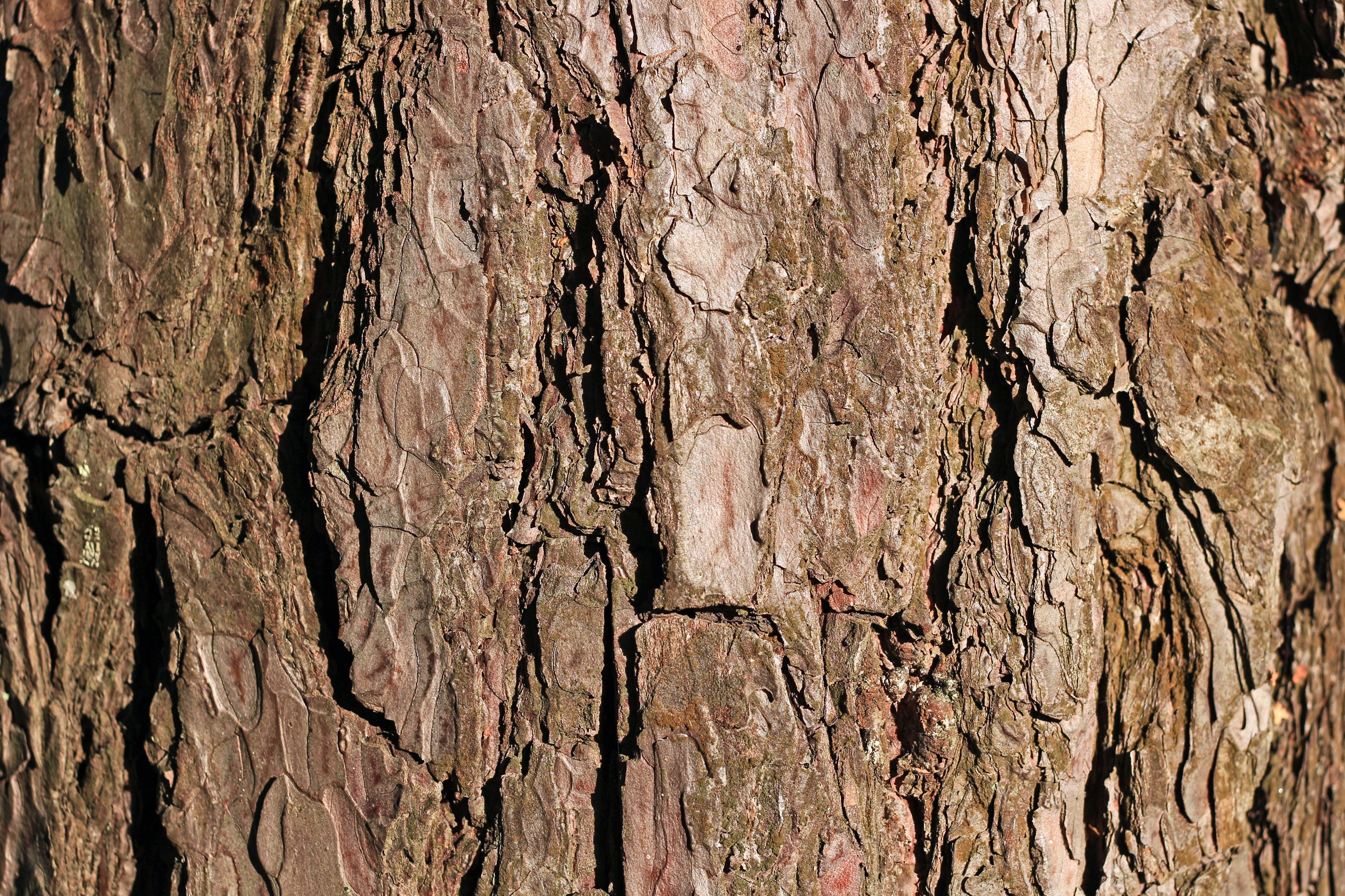 Free Stock Photo Of Background, Bark, Brown