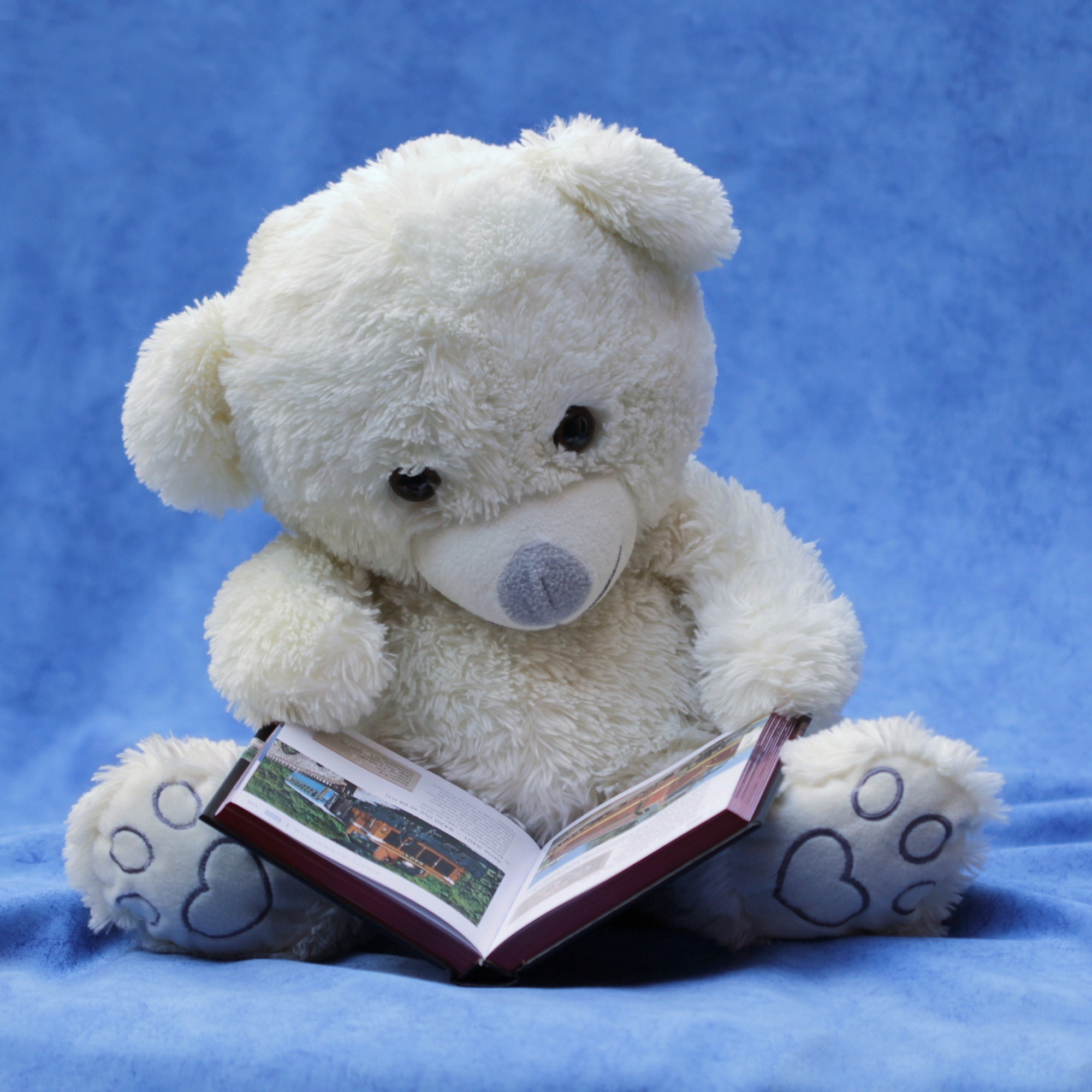 Free stock photos of teddy bear pexels white teddy bear with opened book photo voltagebd Image collections