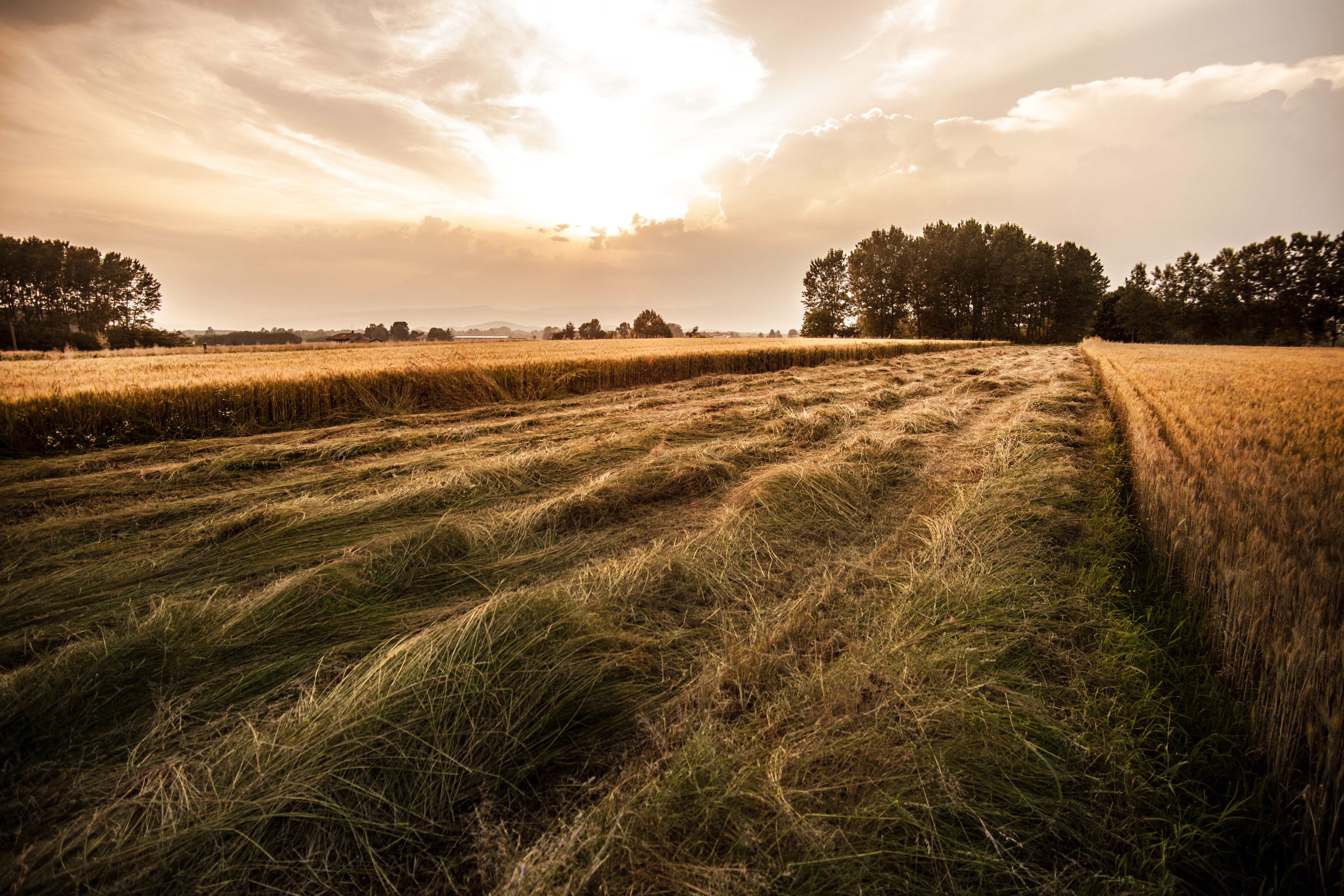 free stock photo of agriculture country field