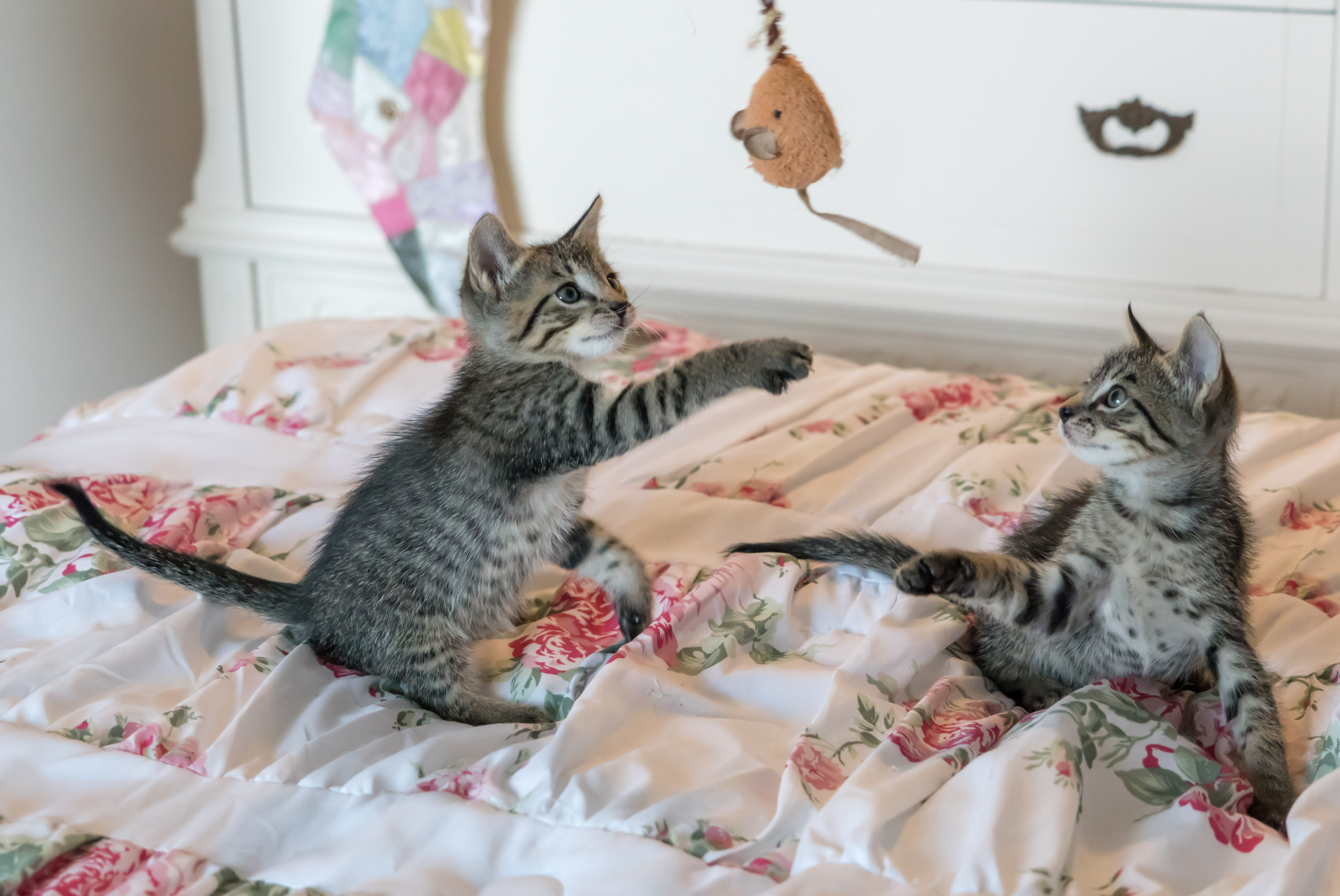 Tabby Kittens on Floral forter · Free Stock