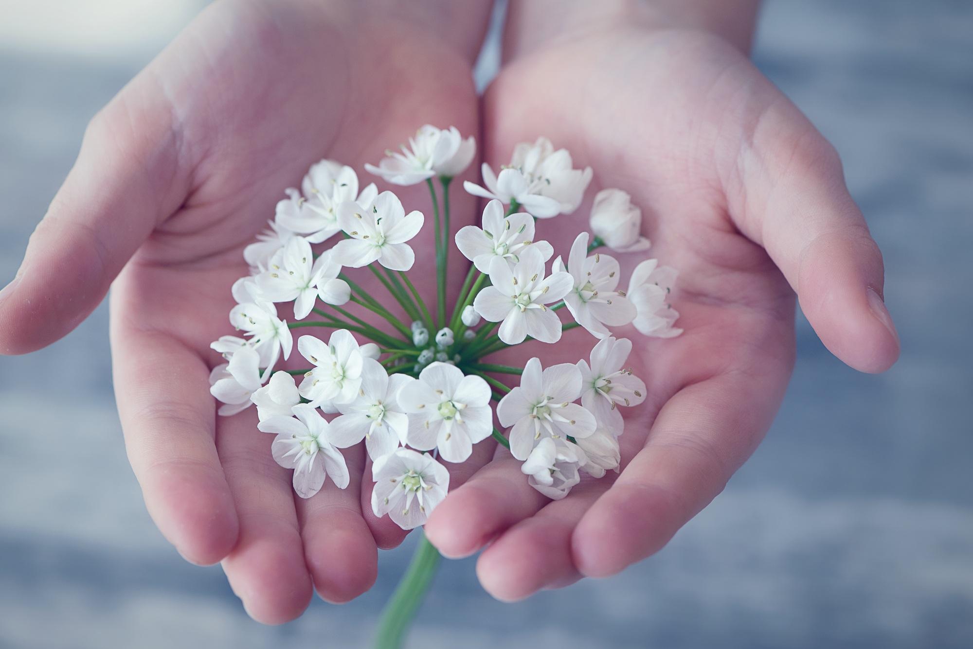 flower-flowers-small-flowers-white-161561.jpeg (2000×1335)