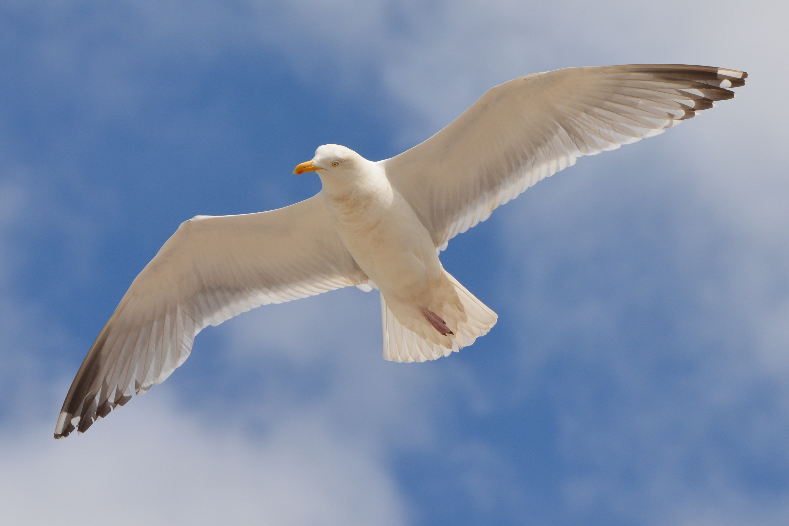 White Bird Flying Under The Blue And White Sky During Daytime 162292