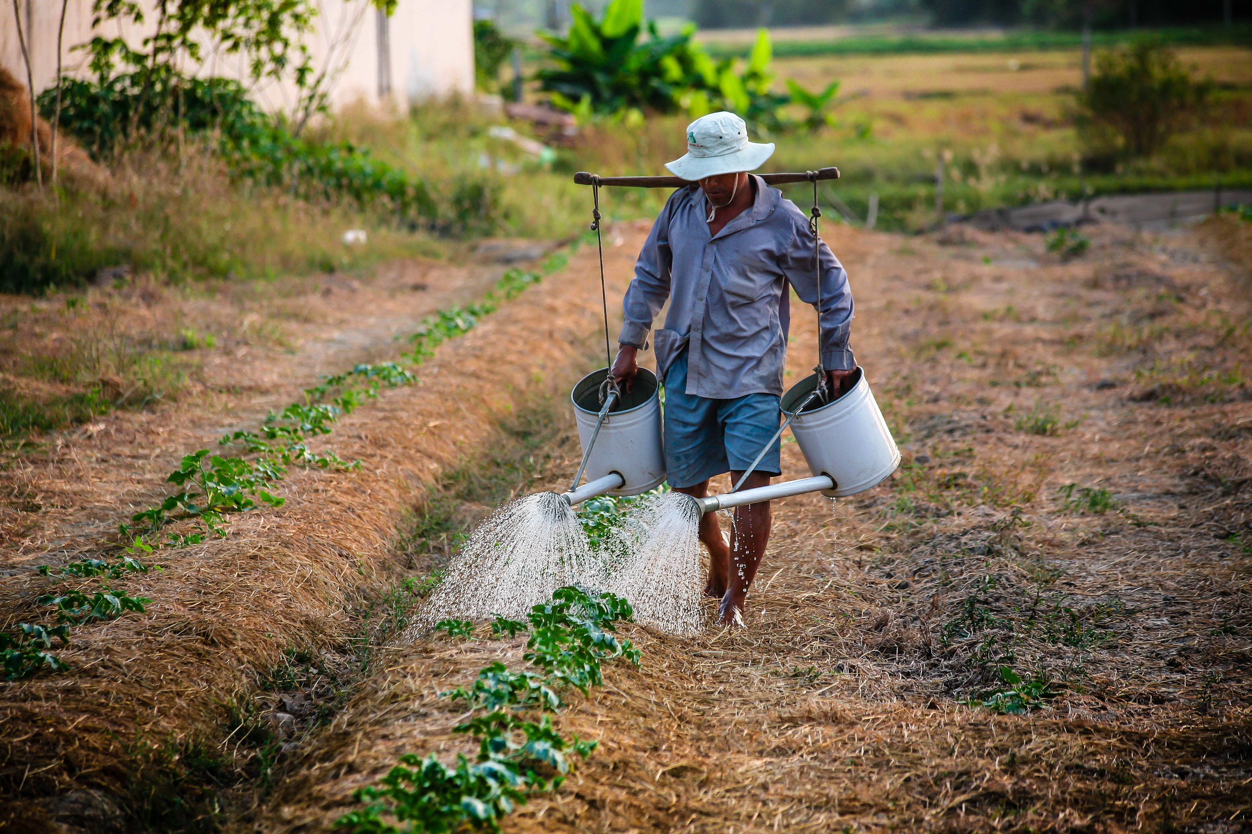 man watering crops in vietnam